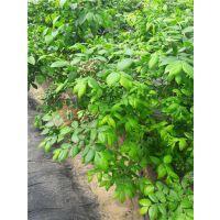 仁源农业科技(图)、蓝莓苗价格、徐州市蓝莓苗