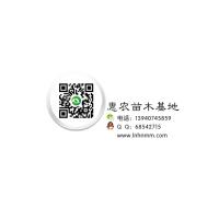 营口市鲅鱼圈区熊岳惠农苗木店