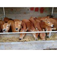 什么地方养殖小黄牛的多