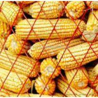 菱形不锈钢圈玉米网+菱形不锈钢圈玉米网厂家+菱形不锈钢圈玉米价格