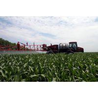 5000亩玉米种植面积
