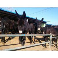 肉用驴的肥育技术