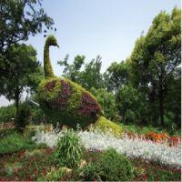 优惠的园艺作物,口碑好的园艺作物在哪里有供应