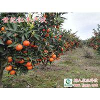 世纪红柑橘