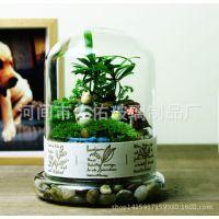 创意透明耐高温玻璃微景观 玻璃两件套景观瓶多肉植物玻璃生态瓶
