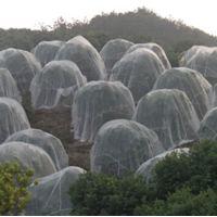 台州防虫网批发 PE纯新料20-120目0.1-0.3mm丝径白色绿色宽1-2m 抗紫外线安平上善