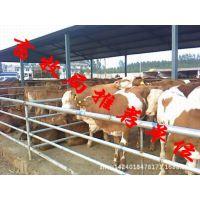 养牛技术光盘深圳什么地方卖肉牛苗
