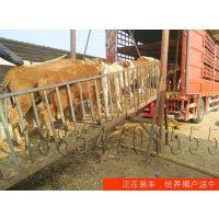 哈尔滨哪里卖小牛犊≈3≈[力较强,母牛一般8-10月]