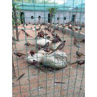 【养鹅围栏网】博达养鹅围栏网的价格 图片 质量 欢迎咨询18802788160