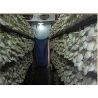 厦门冰雄制冷设备公司专业安装食用菌库