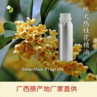 桂花精油 100%纯天然单方桂花原精 广西原产地厂家直供