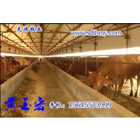 种牛养殖场紧急出售牛苗,小黄牛,小牛犊签约合同免费运输货到付款