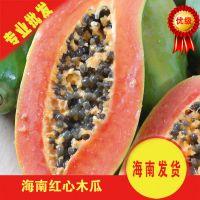 海南特产红心健脾消食木瓜 有机水果 价廉物美 香甜可口
