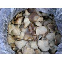 河北供应盐渍鲍鱼菇,质量好。常年供应