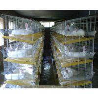 兔笼,河北兔笼厂,母兔笼规格,獭兔笼厂家,安平县兔笼厂家电话,子母兔笼