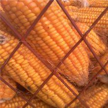 【安平钢板网厂家】直销粮仓网 100刀圈玉米钢板网