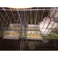 三层可以养12只母兔笼子 子母兔笼子厂家