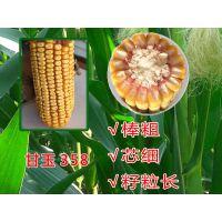 高产玉米新品种甘玉358