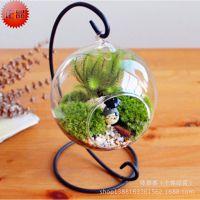 微景观 玻璃吊球 铁艺吊件 苔藓微景观玻璃斜口水培玻璃圆球挂件