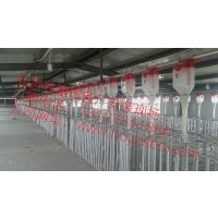 自动料线哪家好 养猪设备泊头弘昌设计安装母猪自动化料线 河北自动化料线安装厂家