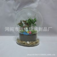 diy创意礼品透明耐热玻璃微景观多肉植物景观瓶两件套玻璃微景观