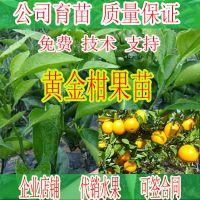 崇左黄金柑果苗标准价格