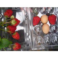 基地新育大量优质高产甜宝草莓苗价格优惠易成活产量高