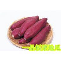 板栗香薯▁板栗香薯产地▁板栗香薯价格▁板栗香薯口感极佳