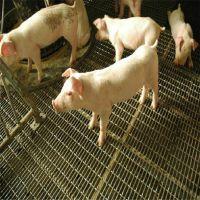 养猪网@养猪铁丝网@养猪铁丝网生产厂家