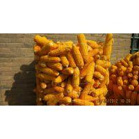 供应安平产玉米圈电焊网 镀锌电焊网卷 圈玉米网尺寸规格是什么