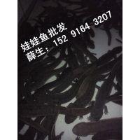 江苏娃娃鱼多少钱一斤,今年最近娃娃鱼苗价格批发是多少