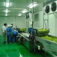 泰和食品机械、蔬菜清洗机哪款好、蔬菜清洗机