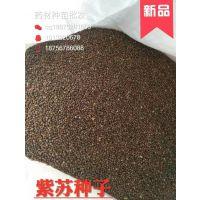 供应高产新货紫苏种子,紫苏苗,紫苏芽