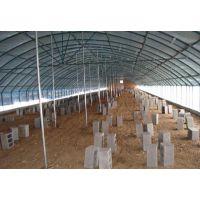 养殖棚促销 养鸡棚 养猪棚 养王八棚 养鸭棚 钢架大棚13920286607