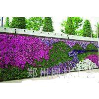 厂家直销室内室外专用植物墙 墙体绿化 绿色植物墙 假植物墙
