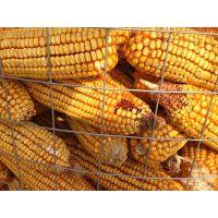 圈玉米网 @钢板网圈玉米网@贵州荷兰网批发价格