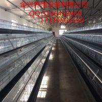 鸡笼 蛋鸡笼设备 蛋鸡笼批发 阶梯式蛋鸡笼设备厂家直销