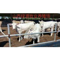 山西绿源牧业养殖场杂交牛价格