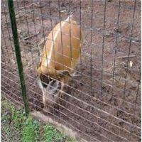 十堰养殖护栏网、龙泰百川栅栏、养殖护栏网多少钱