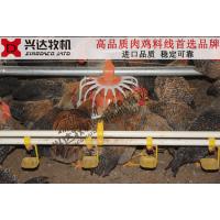 肉鸡料线 自动料线 养鸡自动喂料设备 鸡料线供应肉鸡料线