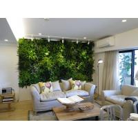 垂直绿化植物墙工程,植物墙产品供货
