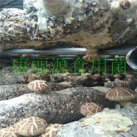 青岛供应出口韩国香菇菌棒,花菇菌棒