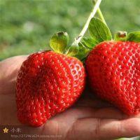 优质甜查理草莓苗|云阳甜查理草莓苗|泰达园艺场(在线咨询)