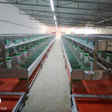 专业生产兔笼厂家 长毛兔繁育一体笼 自动喂养清粪带式种兔繁殖笼价格