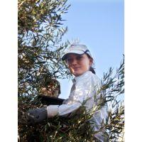 青岛进口初榨橄榄油清关代理/青岛进口西班牙橄榄油清关流程