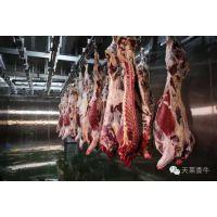 牛肉代理价格 冷鲜牛肉加盟 进口牛肉代理