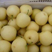 山东早熟美八苹果价格