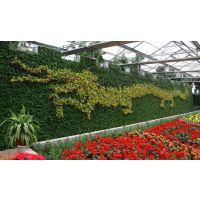 新款植物墙 东莞仿真植物 热带雨林植物墙 假植物 人造植物厂家