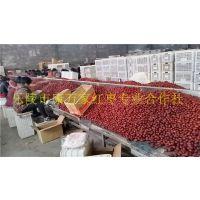 山东新疆和田大枣批发市场在哪