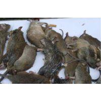灭蟑螂灭老鼠找洁居环保省心省事安全放心